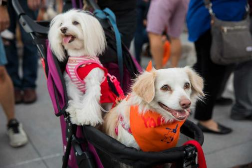 A Free Doggy Meetup in Old Pasadena with a festive flare!